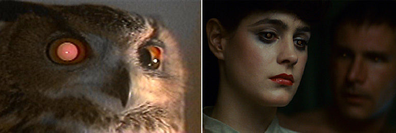 02  Owl-Rachael
