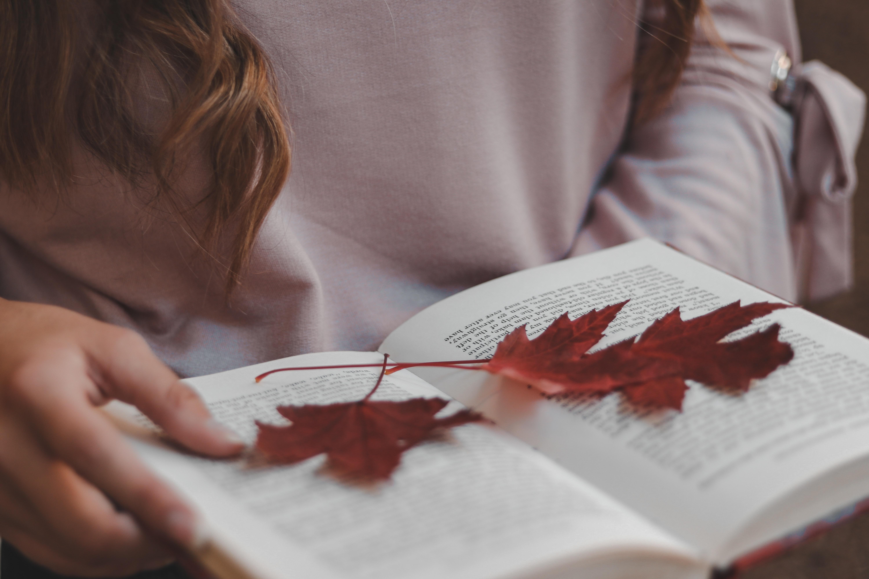 red-leaf-on-book-3032049